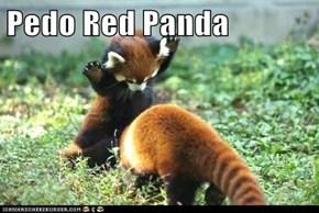 Pedo Red Panda
