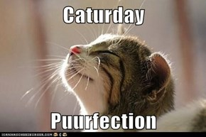 Caturday      Puurfection