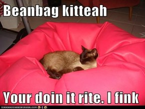 Beanbag kitteah  Your doin it rite. I fink