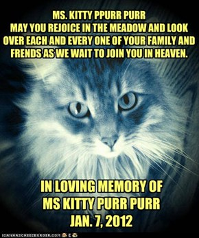 MS. KITTY PPURR PURR MAY YOU REJOICE IN THE MEADOW AND LOOK OVER EACH AND EVERY ONE OF YOUR FAMILY AND FRENDS AS WE WAIT TO JOIN YOU IN HEAVEN.