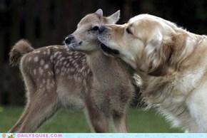 Interspecies Love: Gilded Love
