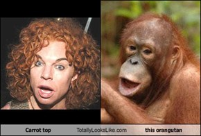 Carrot top Totally Looks Like this orangutan