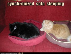 synchronized  sofa  sleeping