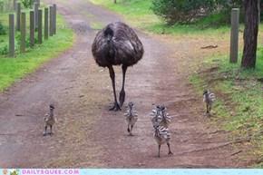 Squee Spree: Papa Emu's E-Crew!