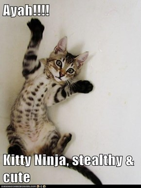 Ayah!!!!  Kitty Ninja, stealthy & cute