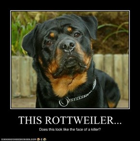 THIS ROTTWEILER...