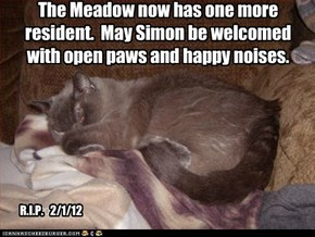 The Meadow now has one more resident.  May Simon be welcomed with open paws and happy noises.