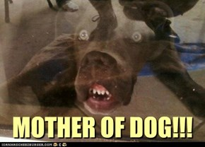 MOTHER OF DOG!!!