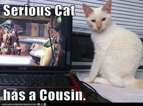 Serious Cat  has a Cousin.