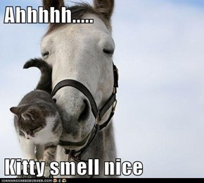 Ahhhhh.....  Kitty smell nice