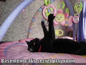 Basement cat's secret play room