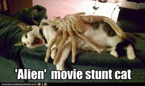 Famous movie pics that deserve a cat....