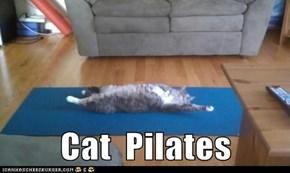 Cat  Pilates