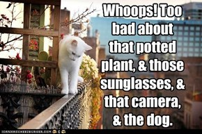 Whoops! Too bad about that potted plant, & those sunglasses, & that camera, & the dog.