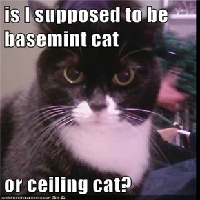 is I supposed to be basemint cat   or ceiling cat?