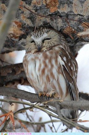 Zen and the Art of Cooing, Sleeping Owl