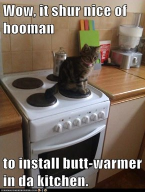 Wow, it shur nice of hooman  to install butt-warmer in da kitchen.