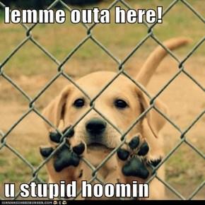 lemme outa here!  u stupid hoomin