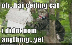 oh...hai ceiling cat  i didnt nom anything...yet