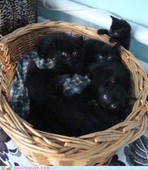 A Basket Full of Cuteness