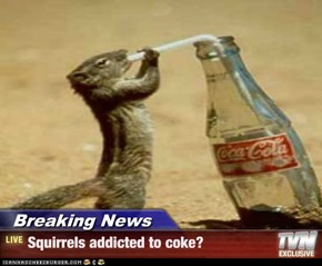 Breaking News - Squirrels addicted to coke?