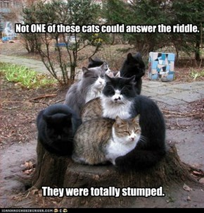 Not ONE of these cats could answer the riddle.