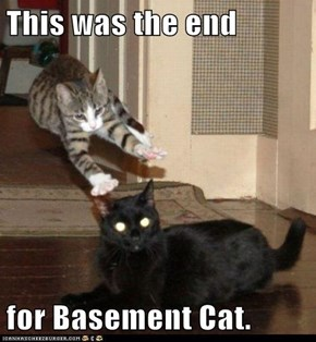 This was the end  for Basement Cat.