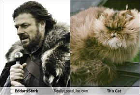 Eddard Stark Totally Looks Like This Cat
