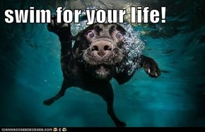 swim for your life!