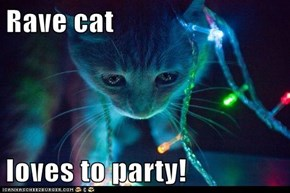 Rave cat  loves to party!