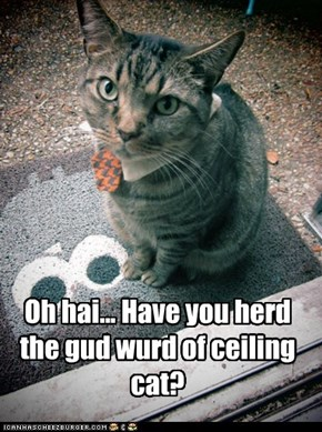 Oh hai... Have you herd the gud wurd of ceiling cat?
