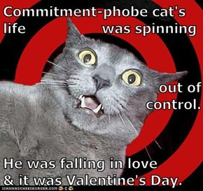 Commitment-phobe cat's life                  was spinning out of                                         control. He was falling in love               & it was Valentine's Day.