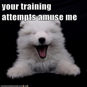 your training attempts amuse me