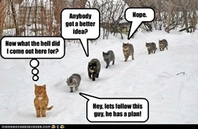Hey, lets follow this guy, he has a plan!