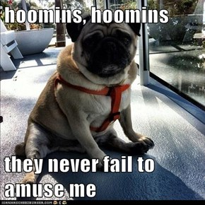 hoomins, hoomins  they never fail to amuse me