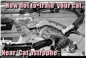How not to 'train' your cat  Near 'Cat'astrophe
