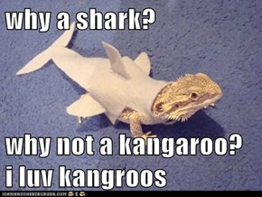 why a shark?   why not a kangaroo?  i luv kangroos