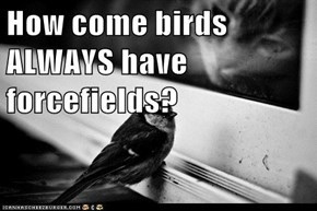How come birds ALWAYS have forcefields?