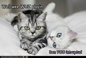 Purrrrfect Playmates