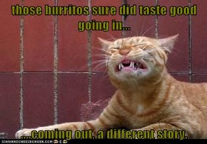 those burritos sure did taste good going in...  ....coming out, a different story.