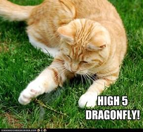 HIGH 5 DRAGONFLY!