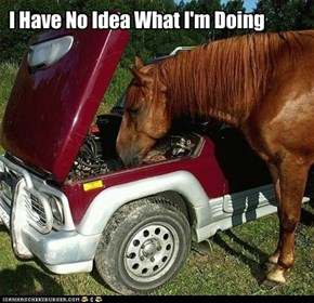 Animal Capshunz: *Insert Joke About Horsepower*