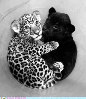 Cub Cuddles
