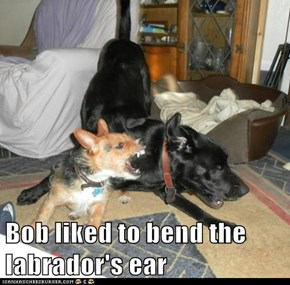 Bob liked to bend the labrador's ear