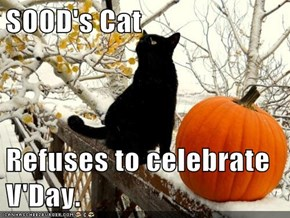 SOOD's Cat  Refuses to celebrate V'Day.