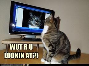 Cat Monitor