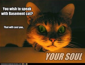 You wish to speak with Basement cat?