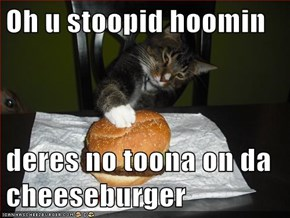Oh u stoopid hoomin  deres no toona on da cheeseburger