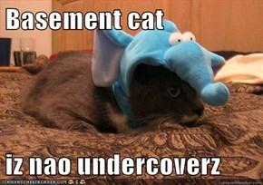 Basement cat  iz nao undercoverz