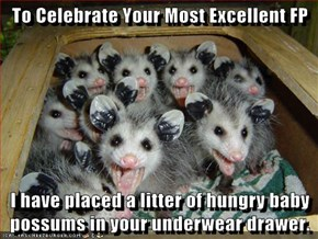 To Celebrate Your Most Excellent FP  I have placed a litter of hungry baby possums in your underwear drawer.